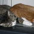 テレビの上で寝る猫たち