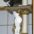 タワーで遊ぶ2匹