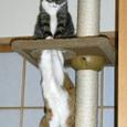 タワーで遊ぶ2匹その2